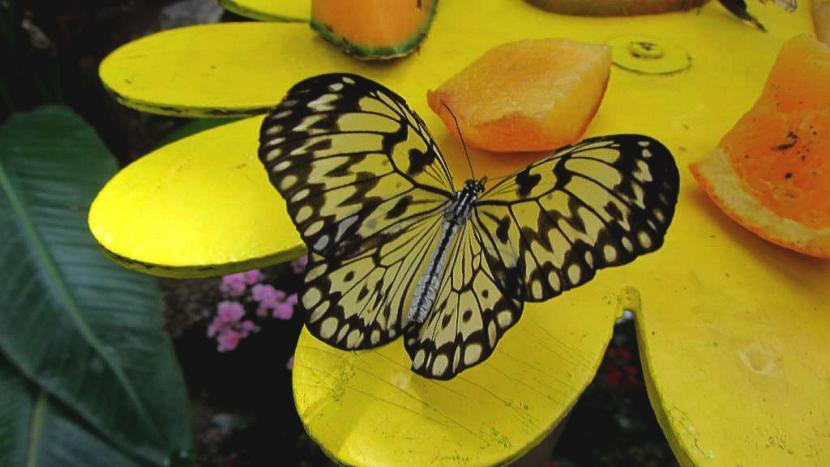 metulj_1.jpg