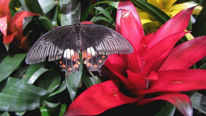 metulj_2.jpg