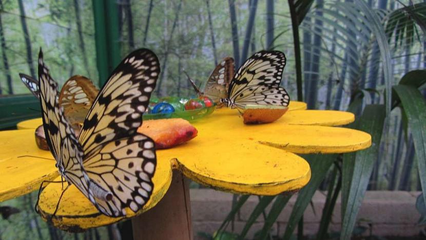 metulj_3.jpg