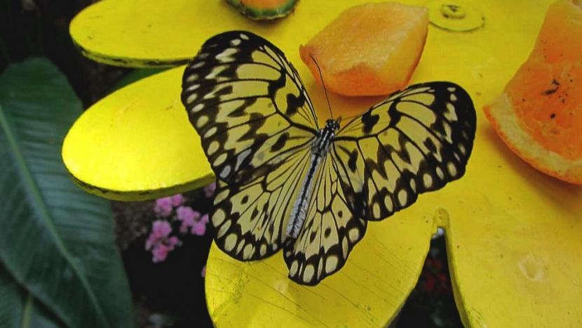 metulj_4.jpg